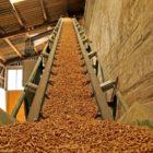 La produzione del pellet: come nasce il combustibile per le nostre stufe?