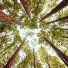Dai camini a legna al pellet antismog: bruciare naturale senza inquinare